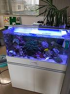 福島県 熱帯魚 海水魚 水槽 レンタル