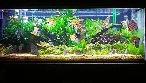 郡山市熱帯魚