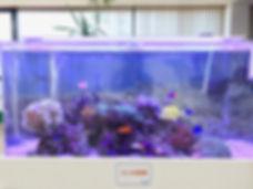 福島市海水魚
