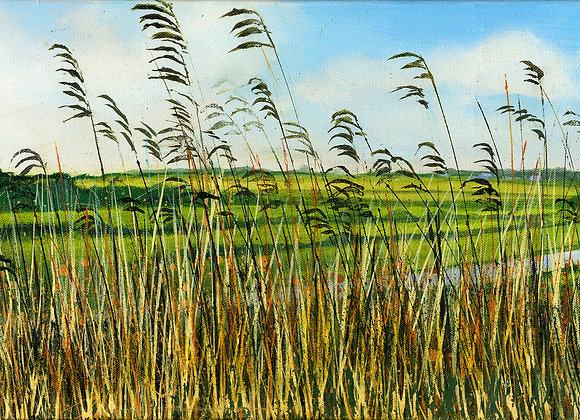 Reeds by the Canal