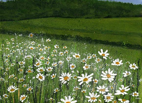 Oxeye Daisy Meadow