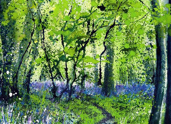 Springtime Woodland Walk