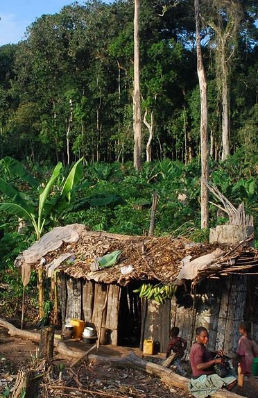 forest farmers_edited.jpg