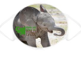 Baby Elephant Mask