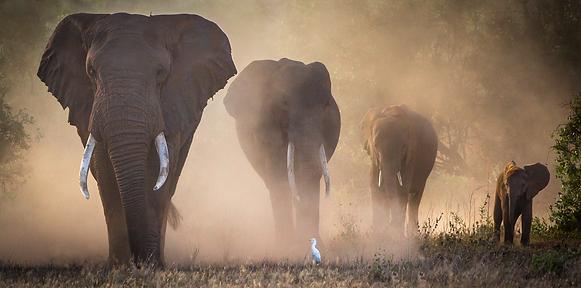 4 Generations Elephants Michael North.ti