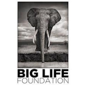 big life foundation.jpg