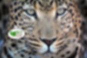 leopard ecu_logo.jpg