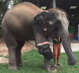 mosha baby with fake leg.jpeg
