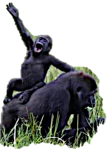 BABY CHIMP WAVING.png