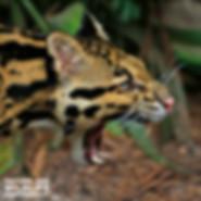 Nature-Wildlife NAV.jpg