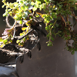 succulents in a shoe
