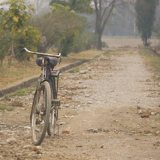 Bicycle Grain.jpg
