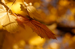 Fall surfaces and textures