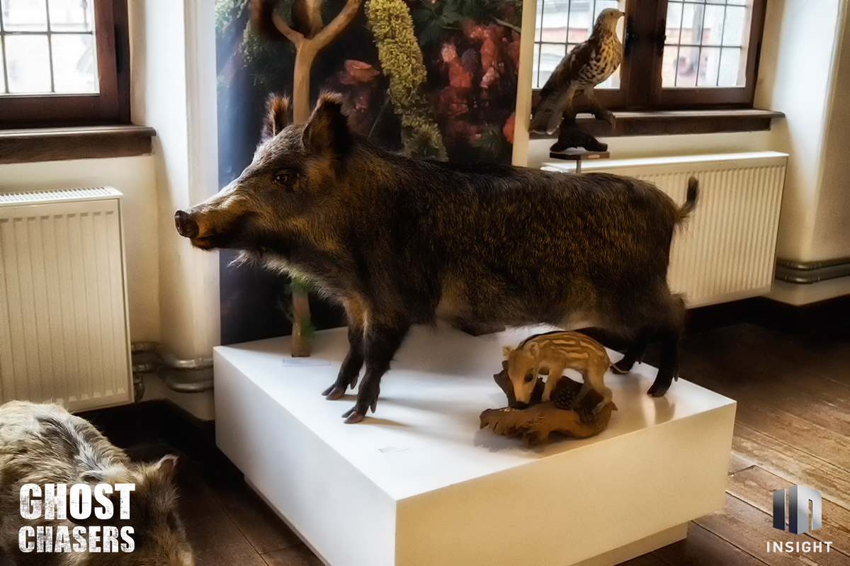 Taxidermy 1 Levaux StAnne