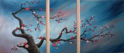Yume Sakura