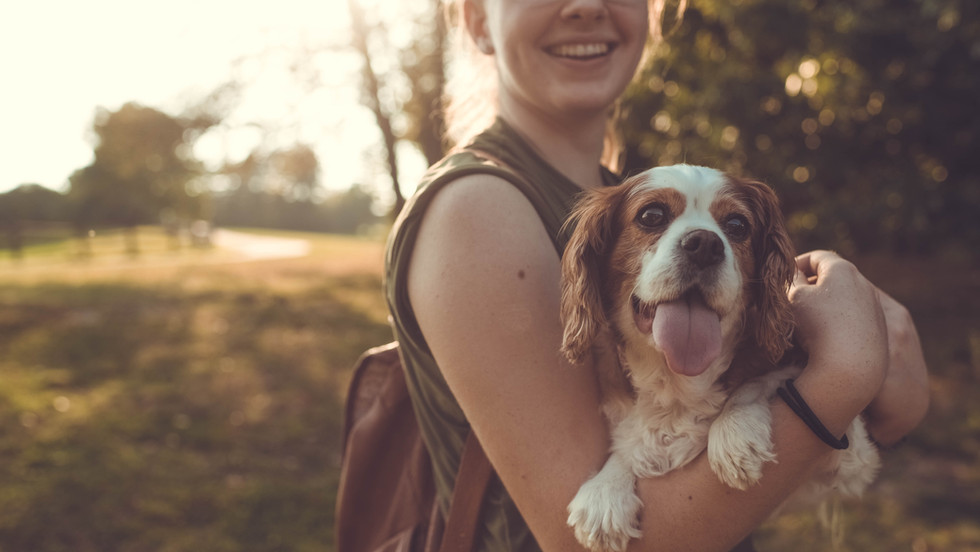 A Guide to CBD for Dogs