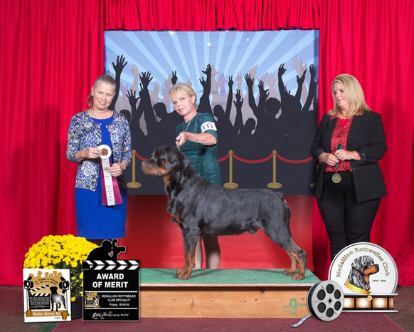Abel wins 2 AOM's at the 2016  MRC Specialty Shows