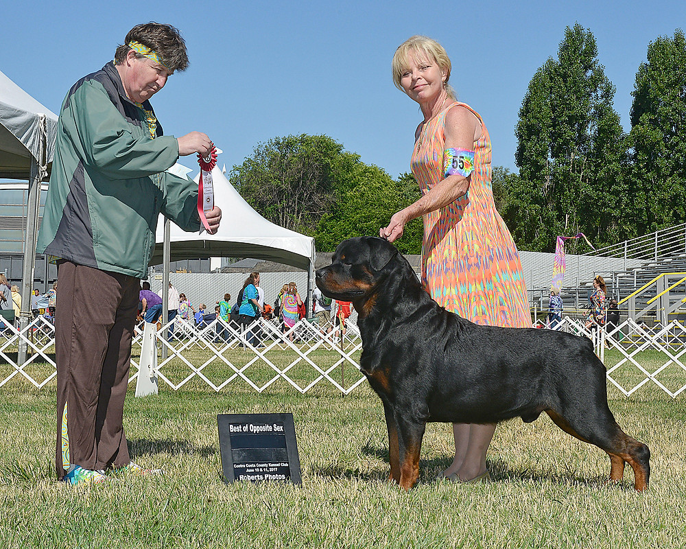Abel and Jeannie had a rad time at WOOFSTOCK in California winning Best Opposite and a Group 4!