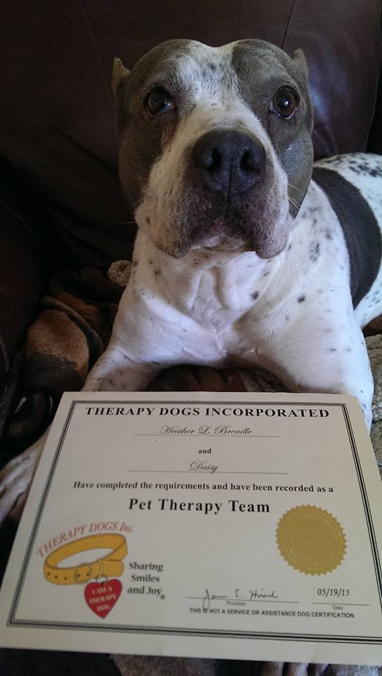 """""""Daisy"""" A Certified Therapy Dog"""