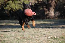 Duke & Jolly ball