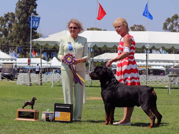 Abel is BISS at the 2016  Golden State Rottweiler Club