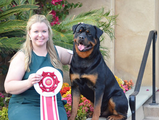 """Peyton"" and Kirsten go BOSS at Southwestern Rottweiler Club of San Diego!"