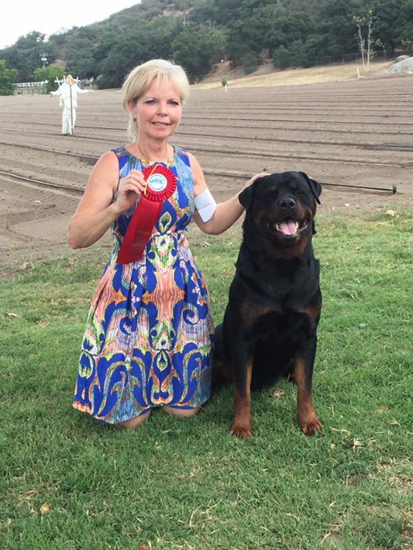 Abel and Jeannie win back to back  Best of Breed, Group 2 and Group 4  at Bahia Sur!!