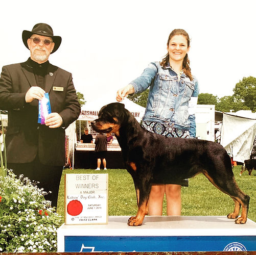 SilverHeart Rottweilers, SilverHeart Pink Cashmere, AKC Champion, Paisley, AKC Rottweiler Champion