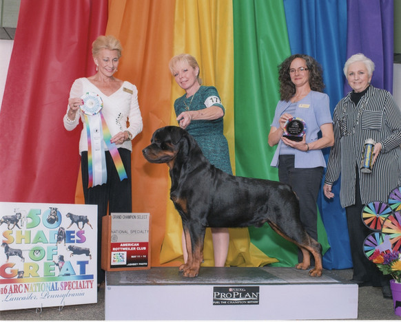 Abel is awarded Select Dog at the  2016 ARC National Specialty
