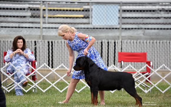 Abel is Best of Breed at the Contra Costa Kennel Club in Vallejo.