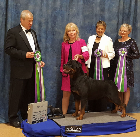 Abel wins Top 20 Competition at the  2017 American Rottweiler Club Specialty in Carson City, Nevada!