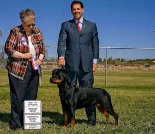 AKC Grand Champion Luna