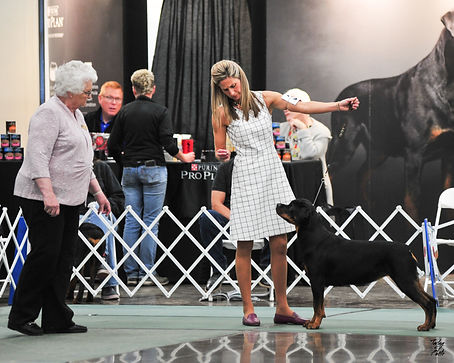 SilverHeart Rottweilers, SilverHeart Pink Cashmere, AKC Champion, Paisley, AKC Rottweiler Champion, ARC National Placement