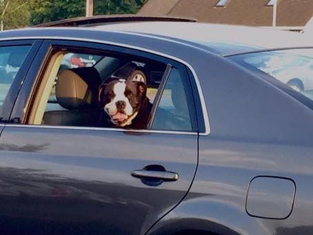 How to remedy canine carsickness