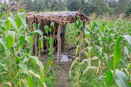Ngurdoto village walk | Shed for night watch | Arusha | Tanzana | Shots and Tales