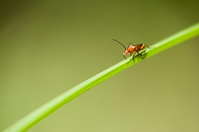 Gaiagen - Insect Identification