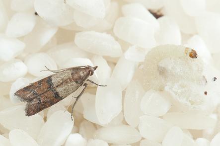 warehouse-almond-moth-damagepng