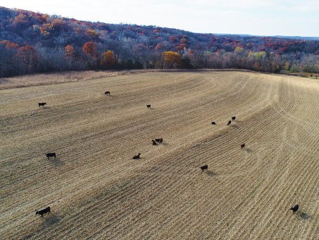 Grazing for Soil Health with the Meierbachtols