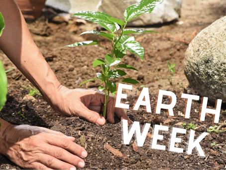 5 Ways to Celebrate Earth Week