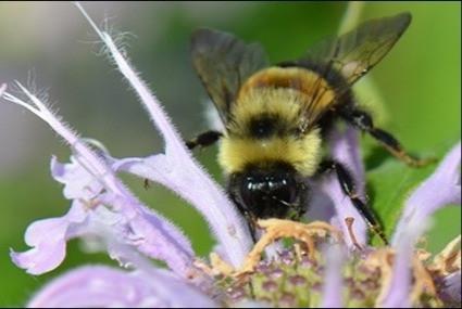 Pollinator Habitat Blooming around Spring Lake