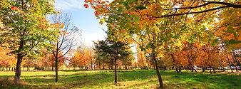 Backyard-Trees4.jpg