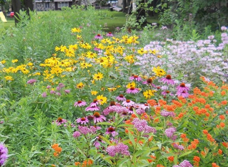 How to Plant Native Prairie
