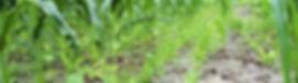 P7100014_edited_edited.jpg