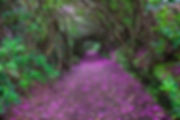 Magical-Paths-Begging-To-Be-Walked-1.jpg