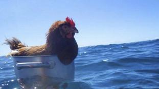 Vacances des poules...