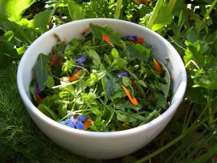 Salade de l'Amap aux 18 plantes sauvages
