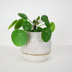Livingston_Planter_Large.jpg