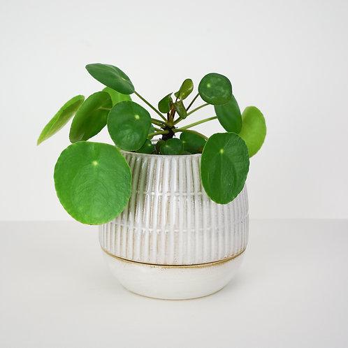 Livingston Planter with Drain Dish