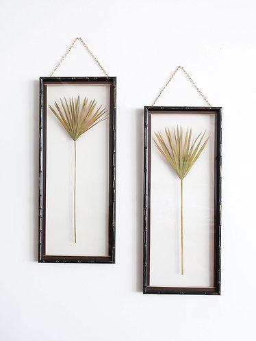 Dried Palms