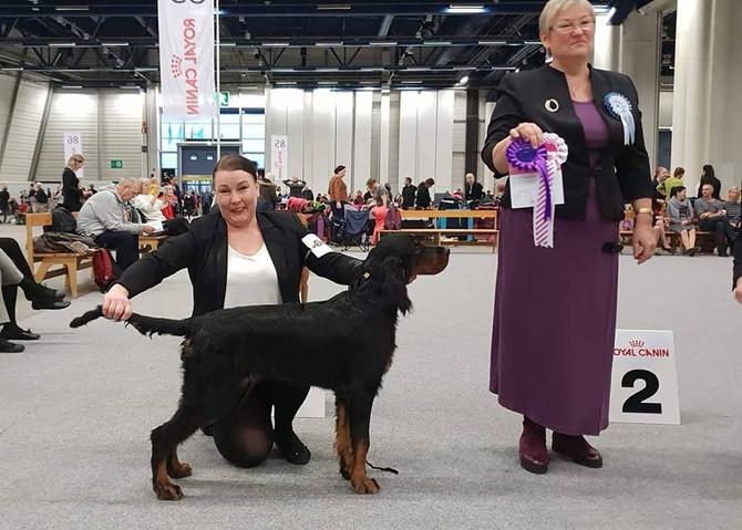 Helsinki Winner Puppy show